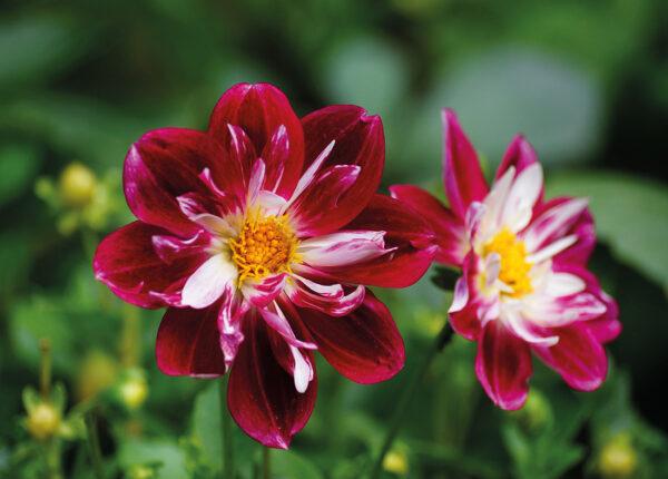 Postkarte Blumen