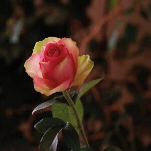 Postkarten Blumen