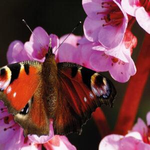 Postkarten Schmetterling