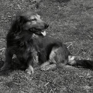 Postkarten Hund