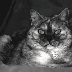 Postkarten Katze